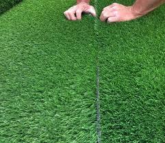 Carpet Grass Malaysia